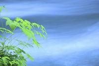 青森県 奥入瀬 玉簾の滝付近 若草と流れ