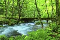 青森県 初夏の奥入瀬渓流