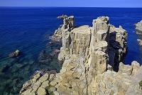 福井県 東尋坊 柱状節理の崖