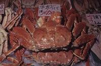 北海道 釧路 魚市場 茹でタラバガニ
