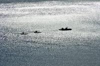 釣りかだ 銀色に輝く海 錦