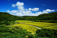 北海道 離島最北の水田