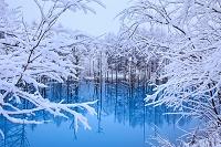 北海道 青い池と霧氷
