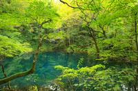 青森県 青池