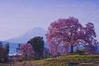 山梨県 わに塚のエドヒガン桜と朝の富士山