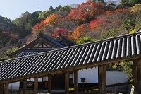 奈良県 第8番札所 長谷寺 登廊と紅葉