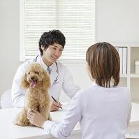 獣医に診察を受ける飼い主と犬