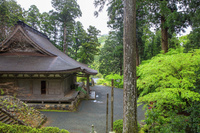 福井県 小雨に煙る新緑の明通寺 本堂