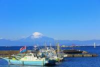 神奈川県 真名瀬漁港から望む富士山と漁船