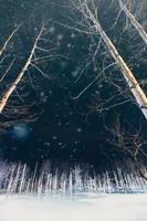 長野県 北海道 雪の青い池