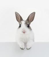塀の上に手をつくウサギ