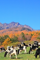 山梨県 清里高原 八ヶ岳牧場