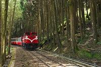 台湾 阿里山森林鉄道 阿里山