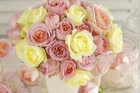 ピンクとイエローのバラ