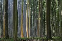 ドイツ ヤスムント国立公園