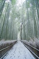 京都 嵯峨野 竹林