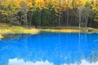 長野県 カラマツと青い池