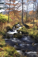 乗り鞍高原の秋の一ノ瀬川