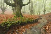 霧のかかった森