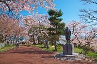 宮城県 桜と日和山公園