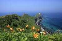 北海道 エゾカンゾウの花咲く神威岬