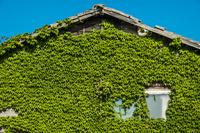 草に覆われた古い家