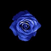 青いバラ(合成)