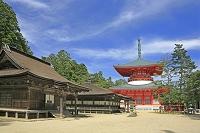 和歌山県 高野山の壇上伽藍の根本大塔と御影堂