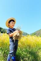 山梨県 稲穂を抱える日本人の男の子と青空
