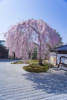 京都 高台寺