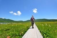 初夏の湿原を歩くハイカー