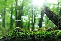 森の中の双葉と光