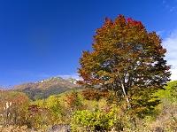 長野県 乗鞍高原 乗鞍岳と大楓