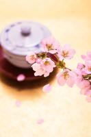 茶碗と桜の花