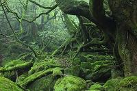 鹿児島県 白谷雲水峡