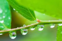 島根県 雨の雫