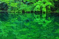 新潟県 津南町 初夏の龍ケ窪の水