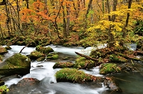 青森県 十和田市 紅葉の奥入瀬渓流