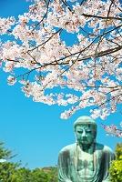 鎌倉市 高徳院の大仏