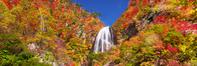 日本 秋田県 紅葉の安の滝