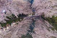 青森県 外濠と桜ライトアップ 弘前城