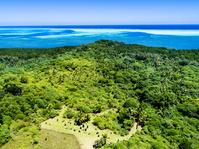 パラオ バベルダオブ島 バドルルアウ遺跡 ジャングル