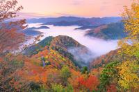 滋賀県 朝の小入峠より望む雲海に浮かぶ紅葉の山並み