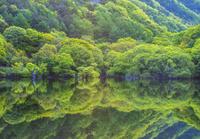 韓国 森と湖