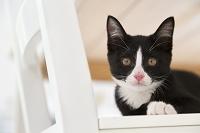 椅子に伏せる猫