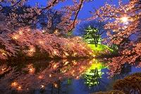 新潟県 高田公園の夜桜