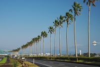 宮崎県 ヤシの木と道