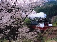 静岡県・島田市 サクラと大井川鉄道