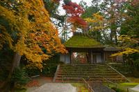 京都府 法然院の紅葉