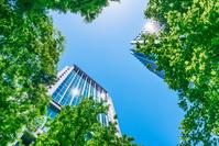 東京都 新緑の丸の内ビジネス街